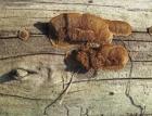 Poškození dřevěných konstrukcí biotickými a atmosférickými činiteli
