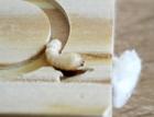 Účinnost tepelných metod sanace dřevěných prvků konstrukcí při biotickém napadení – Horkovzdušná sterilizace a mikrovlnná technologie
