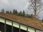 Plocha zelených střech v Česku meziročně vzrostla o více než 15 procent