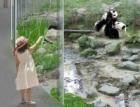 Pražská zoo představila nové pavilony pro lední medvědy a pandy