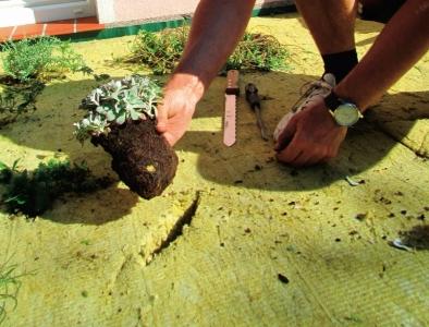 Hydrofilní desky ISOVER pro vegetační střechy