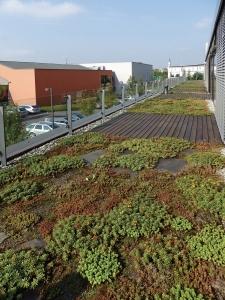 Realizace vegetační střechy na administrativní budově
