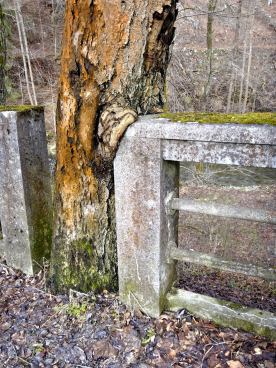 Vegetace poškozující konstrukce