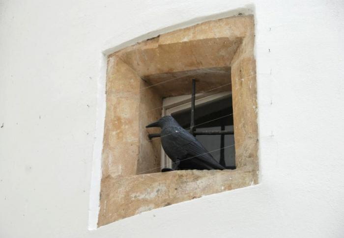 Natřenou věž radnice v Litovli hlídají před holuby atrapy havranů, foto www.litovel.eu