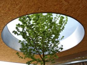 Obr. 7: Javor babyka (Acer campestre) prorůstající vstupním přístřeškem