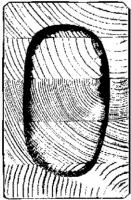 Obr. 6: Drevený lepený nosník – pôvodný prierez. V strede je zostatkový prierez po 30 min teste na požiarnu odolnosť. Za zuhoľnatenou zónou je neporušené drevo.