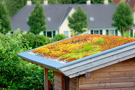 Zelená střecha pro dřevostavby