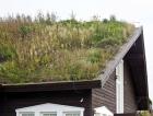 1_Zelená střecha pro dřevostavby