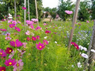 Velískova zahrada Zlín, foto archiv Acris a Zuzana Řezníčková