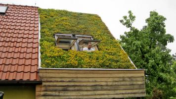 Vegetační střecha po třech letech od realizace, foto ACRE