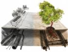 Praha prosazuje implementaci opatření pro výsadbu stromů do ČSN 73 6005