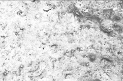 Mikroskopicky hladký povrch Baumit NanoPorTop znesnadňuje usazování nečistot