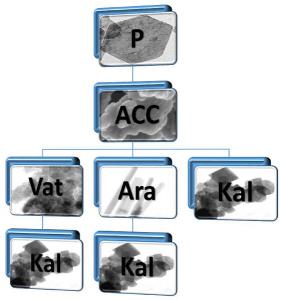 Obr. 1: Schéma karbonatace nanovápna s vyobrazením morfologií vzniklých částic (P = portlandit (Ca(OH)2), ACC = amorfní uhličitan vápenatý, Vat = vaterit, Ara = aragonit, Kal = kalcit)