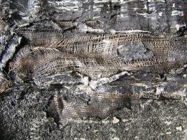 Obr. 17: Obnažená vložka pásu Superpol odebraného ze střechy v Dillí-vady-2-17 96202