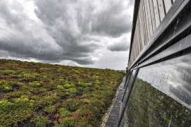 Extenzivní střecha a kořenová čistírna