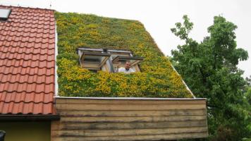Vegetační střecha po třech letech od realizace (zdroj: ACRE)