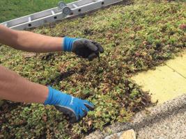 Realizace vegetační střechy (zdroj: ISOVER)