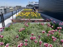 Zvýšené záhony na střešní terase s neotřelými květinovými kompozicemi