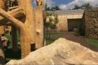 Zoo Dvůr Králové má nový pavilon goril